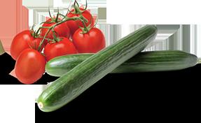 Hodowca ogorka zielonego i pomidora